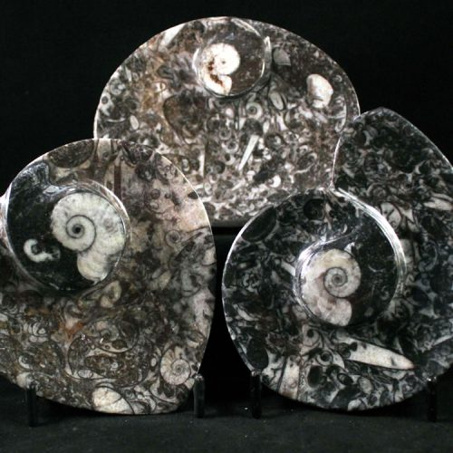 400 Million Year Old Fossil Marble