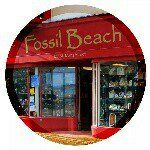 Fossil Beach, Weymouth
